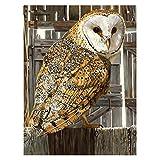 子供の初心者のDIYのための番号大人キットの絵画、ハロウィンメイクキャンバスクリスマスギフトのホームルームの装飾オイルはフレームレス-40X50cm絵画 (色 : White face owl)