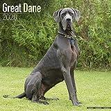 Great Dane (Euro) Calendar - Dog Breed Calendars - 2019 - 2020 Wall Calendars - 16 Month by Avonside (Multilingual Edition)