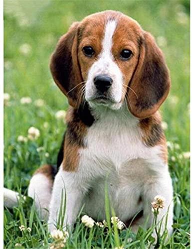 Kits para adultos con diseño de 11 ct DIY DMC estampado bordado Kit de bordado decoración del hogar Kit de punto de cruz puntada de aguja (16 pulgadas × 20 pulgadas) Perro Beagle