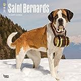Saint Bernards - Bernhardiner 2018 - 18-Monatskalender mit freier DogDays-App: Original BrownTrout-Kalender [Mehrsprachig] [Kalender] (Wall-Kalender)