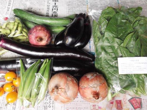 無農薬・無化学肥料 元ちゃんファームの野菜セット [和歌山県:元ちゃんファーム] 産地直送
