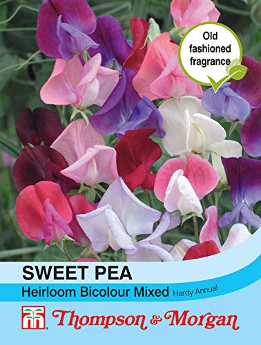 Portal Cool Thompson & Morgan Sweet Pea Heirloom Bicolore Mix Graines
