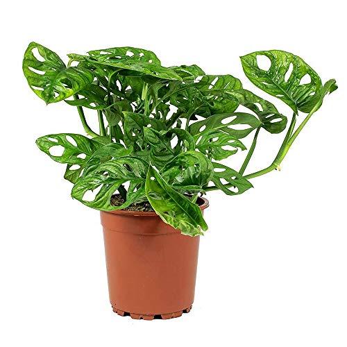 Best exotic indoor plants