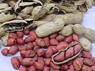 Portal Cool Peanut Seeds - Tennessee Red Valencia - Delicious, High Yielding - 30 Seeds