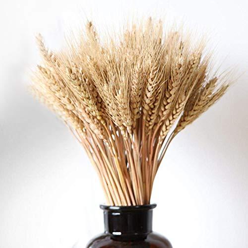 Delleu 100pcs Dorado SED de Trigo Natural seco Paquete Premium arreglos de otoño para DIY diseño...