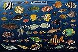 BCTS Póster de peces tropicales laminados para acuario educativo de clases de ciencias de arte de pared, póster de metal, 8 x 12 pulgadas