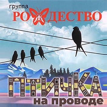 Птичка на проводе (feat. Ольга Бабаева)