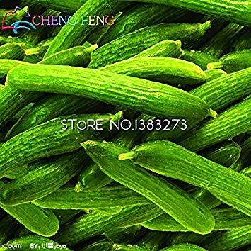 VISTARIC Blanc: Big vente emballage d'origine 20 graines/Pack, graines de melon d'or en remuant, le melon Watkins remuer fruits en pot Balcon et légumes