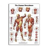 Lona Pintura Al Óleo Músculos Anatomía Humana Arte Sistema De Impresión Del Cartel Plano Del Cuerpo Pared De La Lona Cuadros For La Educación Médica Decoración (Size (Inch) : 60x80cm no frame)