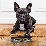 Zoom IMG-1 guinzaglio cane piccolo in nylon