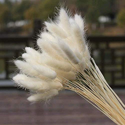 Flores Secas Manualidades Pequeñas flores secas  Marca HUAESIN