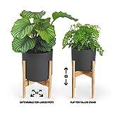 Zoom IMG-2 gadgy porto piante da interno