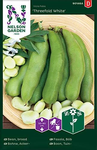 Ackerbohnen Samen für Gemüsegarten - Nelson Garden Saatgut Dicke Bohnen (40 Stück) (Einzelpackung)