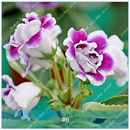 ZLKING de coloré Gloxinia semences Plantes vivaces à fleurs Graines de fleurs Sinningia Speciosa Bonsai Balcon Jaune