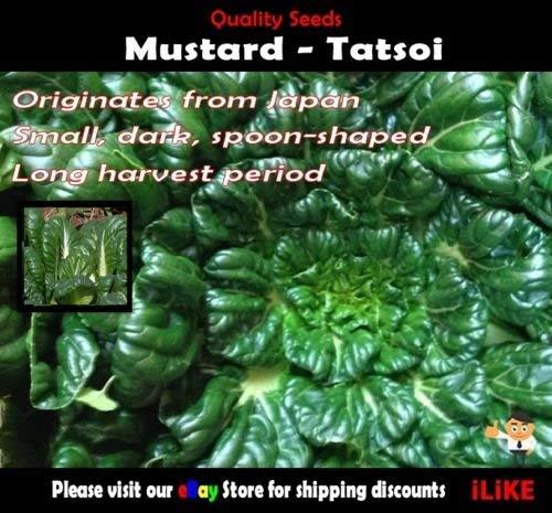 Moutarde Tatsoi 100 Semences potagères minimum jardin d'herbes aromatiques. Sauté Spécialité.