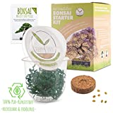 GROW2GO Bonsai Kit incl. eBook GRATUITO - Starter Set con mini serra, semi e terra - idea regalo sostenibile per gli amanti delle piante (Wisteria)