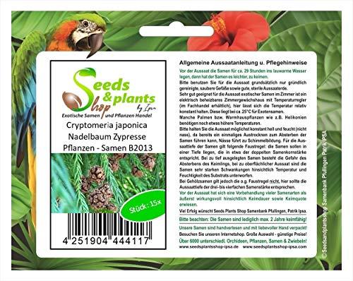 Stk - 15x Cryptomeria japonica Nadelbaum Zypresse Pflanzen - Samen B2013 - Seeds Plants Shop Samenbank Pfullingen Patrik Ipsa