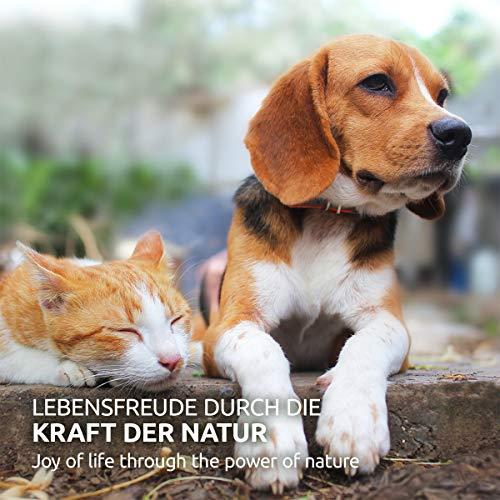 AniForte Natürliches Multivitamin 100g – Naturprodukt für Hunde und Katzen - 6