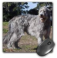 """3Dローズ""""フィールドでアイリッシュウルフハウンド犬Na02 Zmu0132"""