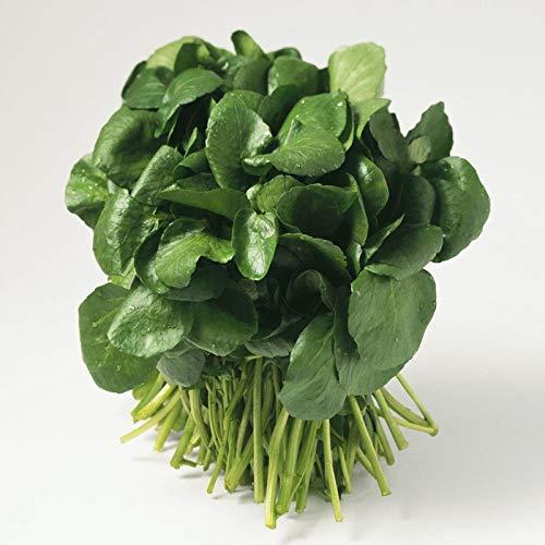 Brunnenkressesamen, Brunnenkresse, Brunnenkresse, kleine grüne Gemüsesamen, Sommersaat, interessante Pflanzen, Gemüsesamen, 300g