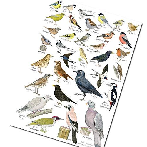 A5 British Garden Birds Identification Postcard Chart - Wildlife, Nature, Card