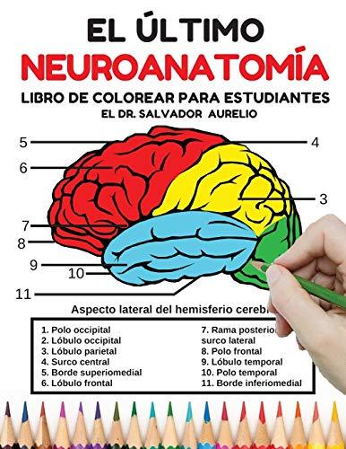 El último Neuroanatomía Libro de colorear para estudiantes: el cerebro humano libro...