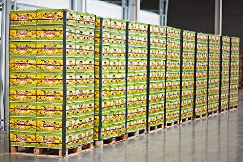 Bananen Standard 18 kg Karton SUPERPREIS!
