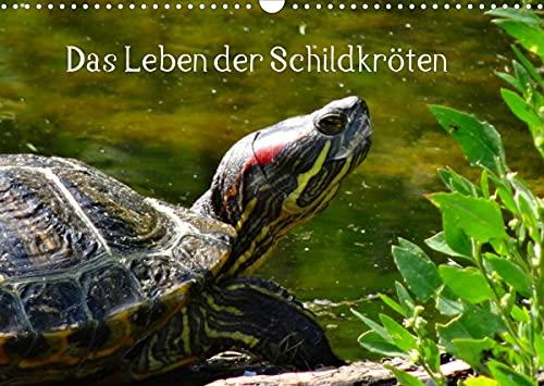 Das Leben der Schildkröten (Wandkalender 2022 DIN A3 quer)