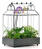 H Potter Glass Terrarium Succulent Planter Wardian Case Container for Plants WAR105