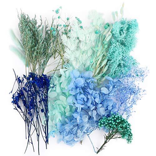 UFLF 12 Tipos de Flores Preservadas Secas Naturales Variadas Plantas Secas Flores Real para Regalos Vela Resina DIY Manualidad Artesanía Bricolaje