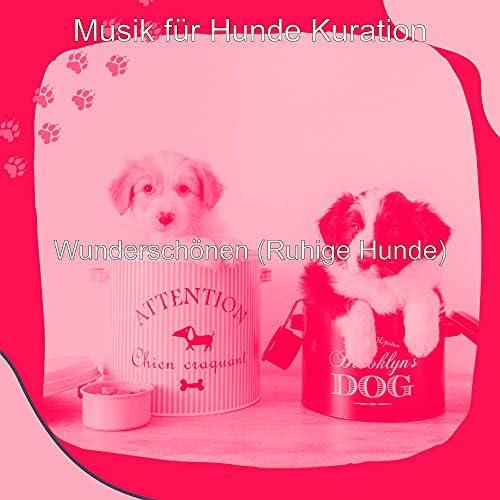 Musik für Hunde Kuration