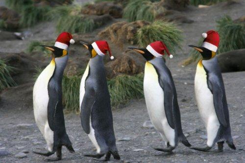 'Divertente set di biglietti natalizi (10pezzi): 'pinguini–un Gruss molto conveniente Set di schede per Natale