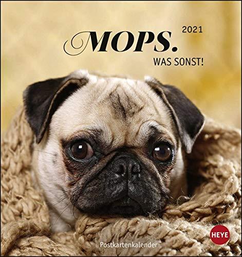 Mops Postkartenkalender 2021 - Kalender mit perforierten Postkarten - zum Aufstellen und Aufhängen - mit Monatskalendarium - Format 16 x 17 cm