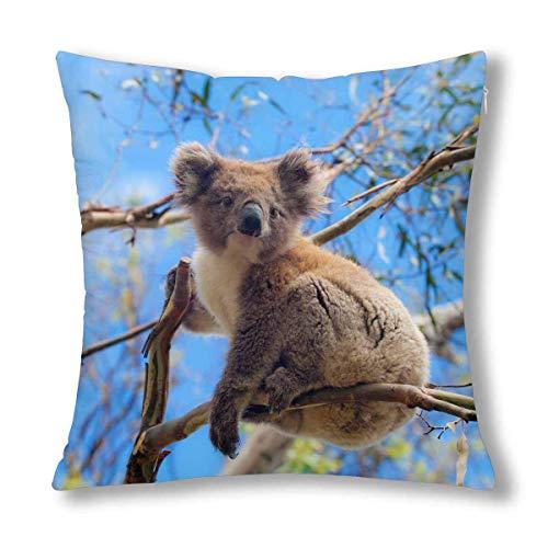 GOSMAO Koala Australiano Cute Animal Decor Throw Cojín Funda de Almohada, Protector de Funda de Almohada 18 x 18 Pulgadas