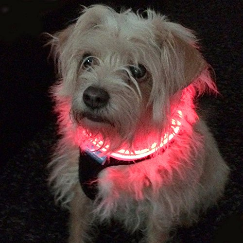Shine for Dogs Ultimate LED Dog Harness