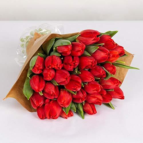 Pflanzen Kölle Tulpen, 30er Bund, rot