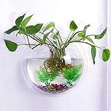 TONGXU 2pz Appeso a Parete in Vetro da Appendere Vaso fioriera Bubble pianta Contenitore (15 cm Diametro) (1pz)