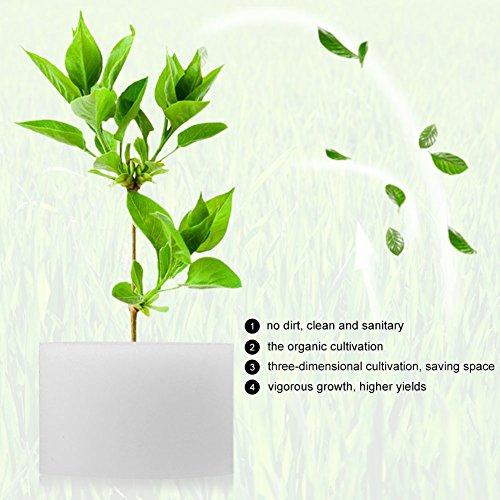 Zerodis Hydroponik Schwämme Soilless Gemüseanbau Gartenbau Gemüse Pflanze Pflanzenwachstum 50Pcs(32mm / 1.3) - 5