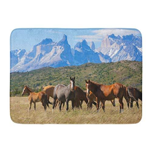 """NCH UWDF Felpudos Alfombras de baño Alfombrilla Azul Nieve Caballos Salvajes en el Parque Nacional Torres del Paine Patagonia Chile Paisaje Verde 15.8""""x23.6"""""""