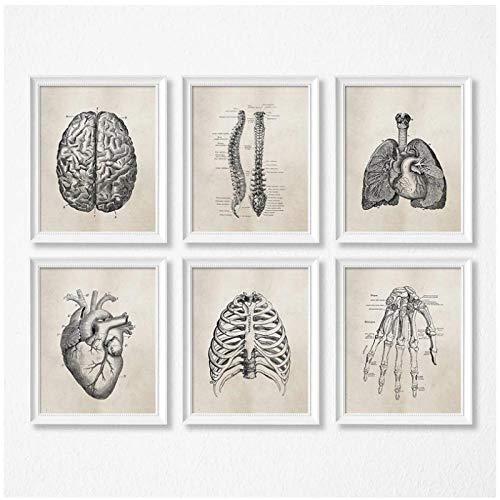DLFALG Carteles antiguos de ciencia de anatomía humana, impresiones artísticas, lienzo de anatomía médica, pintura médica, clínica, cuadros de pared, decoración-30x40cmx6 sin marco
