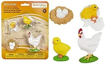Safari Ltd Safariology the Life Cycle of a Chicken