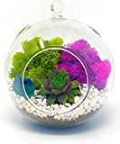DIY Terrarium Kit for Adults with Live Succulent Plant (Fresh from Florida),...