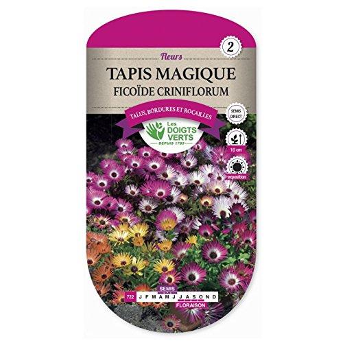 Tapis Magique - Ficoide Criniflorum
