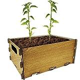PLANTAWA Kit de Siembra para Pimientos, Kit de Cultivo Completo para Huerto Urbano, Jardinera Interior para Casa, Kit Cultivo para Plantas Naturales de Pimientos