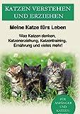 Katzen verstehen und erziehen: Der Katzenratgeber - Was Katzen denken, Katzenerziehung, Katzentraining, Ernährung und vieles mehr!