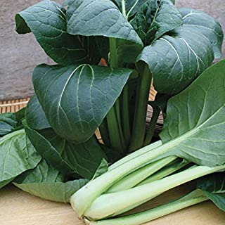 Seeds Package: Mr Fothergill'S Komatsuna Japanese Spinach Te-Suto F1