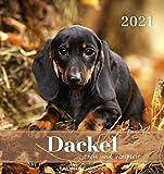 Dackel 2021 - Postkartenkalender 16x17 cm - Dachshunds - zum aufstellen oder aufhängen - Geschenk-Idee - Gadget - Alpha Edition