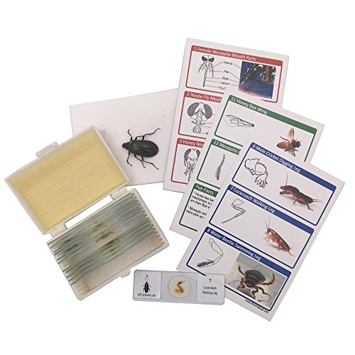 12 Prepared Insect Bug Parts Microscope Slides Set Real Beetle Specimen Postcards STEM Science Kit