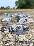 Dive Bomb Industries 1 Dozen G1 Pigeon Silhouette Decoys