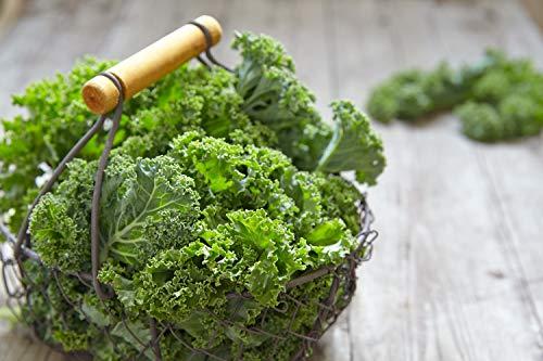 SAFLAX - Ecológico - Col rizada - Invierno Westland - 70 semillas - Con sustrato estéril para cultivo - Brassica oleracea